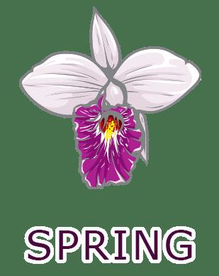 מבצעי אביב אביזרי מין